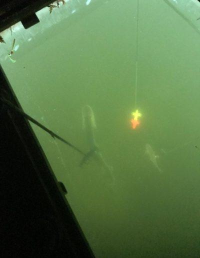 A look down Levi Budkes spear hole